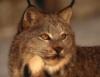 werewolf_cat userpic