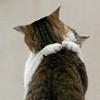 scarlettina: Hug