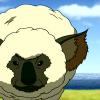 koala_sheep