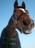 horsepound userpic