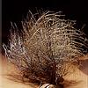 lost tumbleweed
