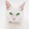 brightshiner userpic