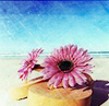 beachflower userpic
