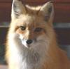 a_lisa_kitsune userpic