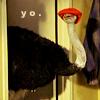 """Ostrich """"yo"""""""