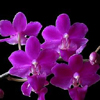 orchid, spring