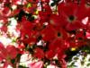 kiotaflowers