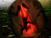 маска красная