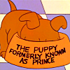 puppy prince