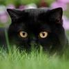 котик с удивленной мордой