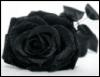 9_rose_noire_6 userpic