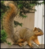 cedarsquirrel userpic