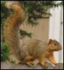 cedarsquirrel userpic