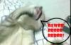 deadblackcat