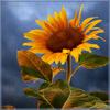 art by florianda_sunflower