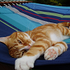 mehhhhhh: hammock!cat - I am coming back as a cat