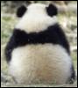 Panda_Back
