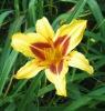 blk: flower