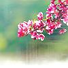 blossom by jhava