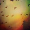 13th_blackbird: 13 ways