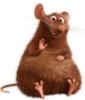 толстый крыс