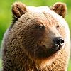 perplexed_bear userpic