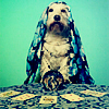 Dogs: Fortunes