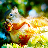 beyond_squirrel: get nuts or die trying