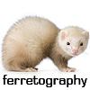 ferretography