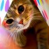 thelovebee: Kitten with polka dots