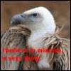 necro_vulture userpic