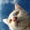 Кот и небо