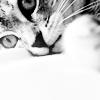 spud66cat
