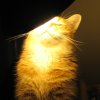 Cat with lamp