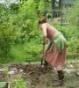 vaingloriesque: gardening