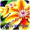 eponymous_rose
