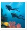 scubasnorkeling userpic