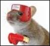 frantic_mice