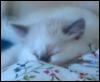 sleeping cloudberry