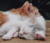 novascotiasam: kitties