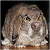 заяц бля