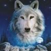 jurikpolt: Wolf
