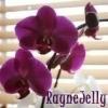 RayneJelly