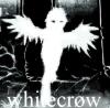 whitecr0w