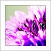 landscape || plant || cornflower, landscape || purple flowers