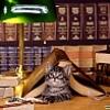 кошка и книги
