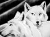 white_shewolf userpic