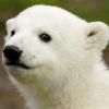Barszczow A. N.: default 02 Knut smug
