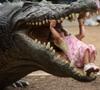 ПоллиЯнна: ...и крокодил.