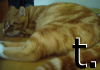 tufftaffaty userpic